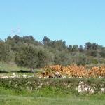 Paysage d'automne en Uzège ; photo Pays d'Uzège Pont du Gard
